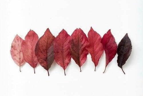 punaisia puunlehtiä