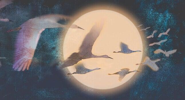 linnut lentävät kuun edestä