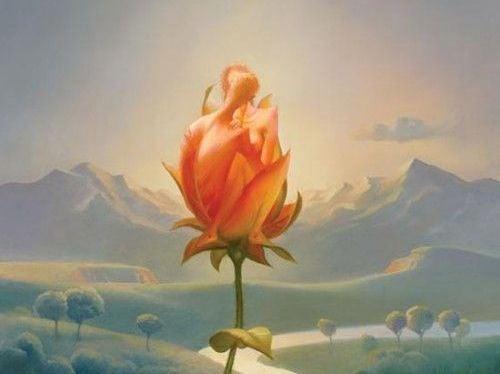 kaunis ruusu