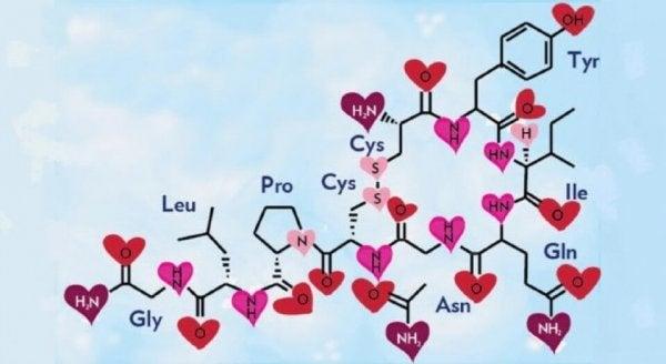 rakkauden kemiallinen kaava