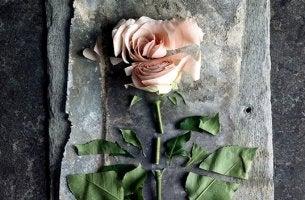 leikelty ruusu