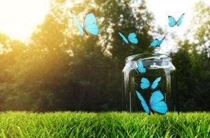 onnellisuuspullo ja perhoset