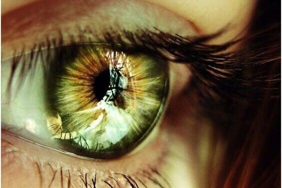 heijastus silmässä