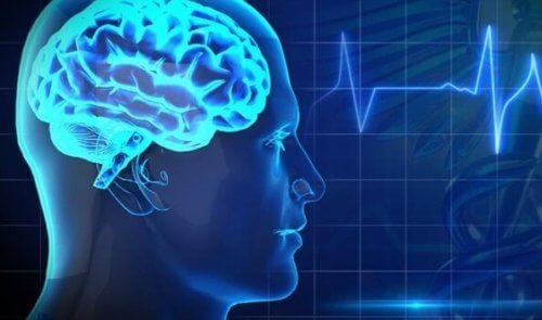miehen aivot
