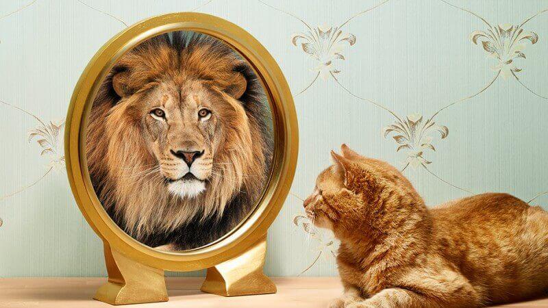 kissa näkee itsensä leijonana