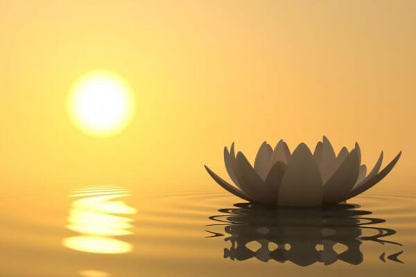 lotuskukka auringossa