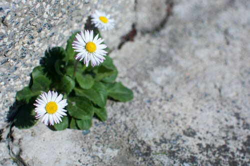 kukat kasvavat kiven välistä - uhrin sinnikkyys