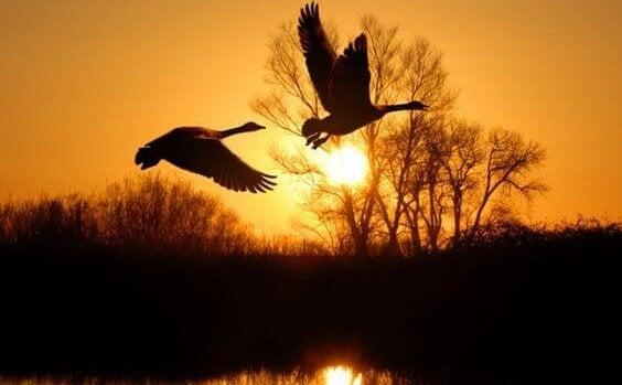 linnut lähtevät lentoon