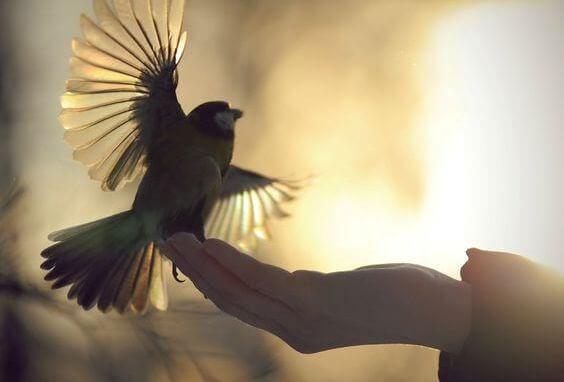 lintu käden päällä
