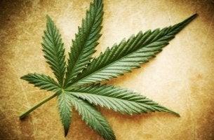 marihuanan myytit