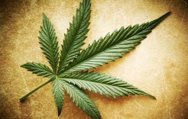 Marihuanan myytit, totuudet ja puolitotuudet
