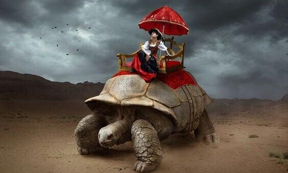 matkustaa kilpikonnan päällä
