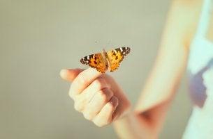 perhonen kädellä
