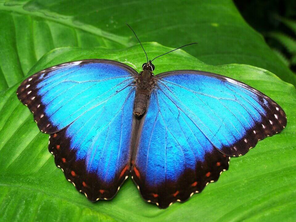 sinisen perhosen muutostarina
