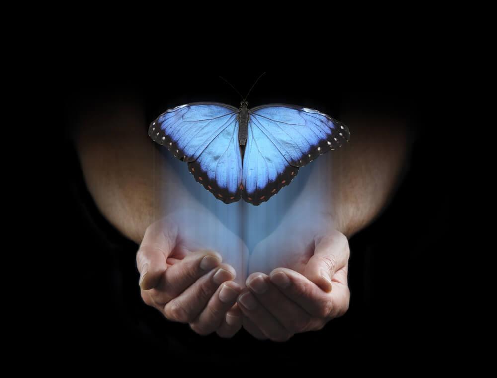 suuri sininen perhonen