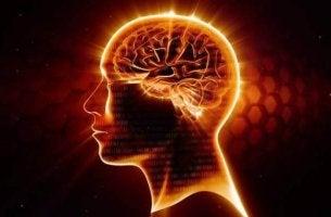 terveet aivot