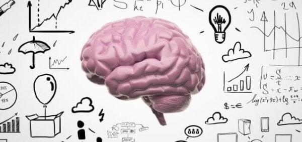 aivot ja kuinka muisti toimii