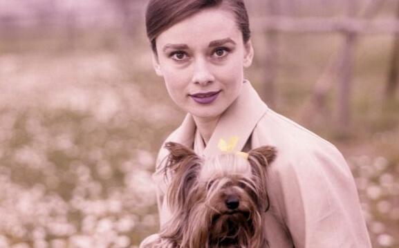 Audrey Hepburn koiran kanssa