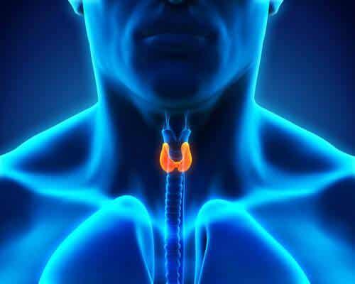 Mitä kehossasi tapahtuu, jos sinulla on ongelmia kilpirauhasen kanssa