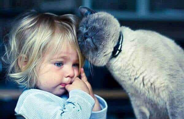 Kissaterapia: 5 hyötyä kissojen kanssa elämisestä