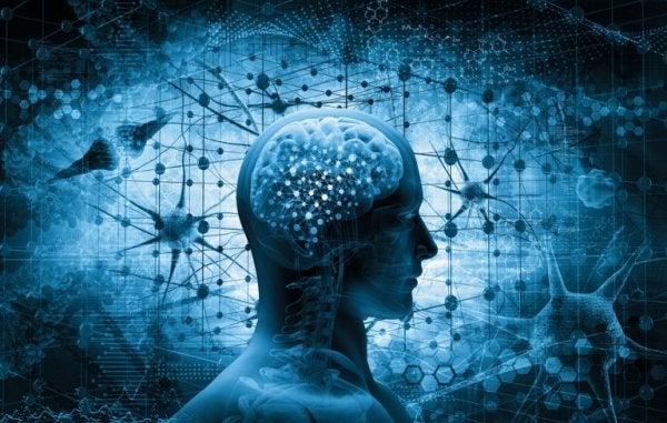 neurobiologia ja ihmisaivot