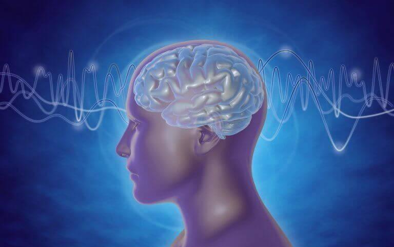 aivot ja aivoaallot