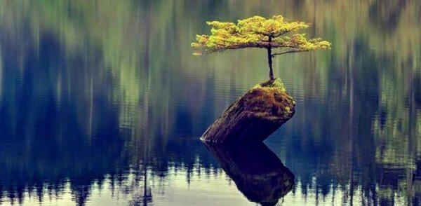 pieni puu kasvaa vedessä olevan halon päällä