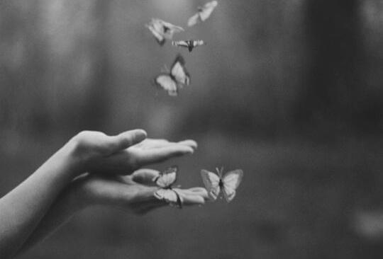 perhoset lentävät pois
