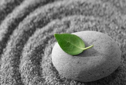 vihreä lehti harmaalla kivellä