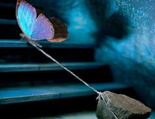 perhonen vetää kiveä perässään