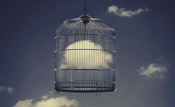 pilvi jäänyt loukkuun lintuhäkkiin