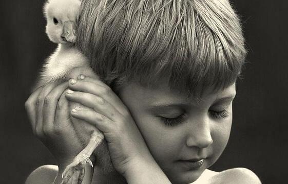 pinei lapsi halaa ankanpoikaa