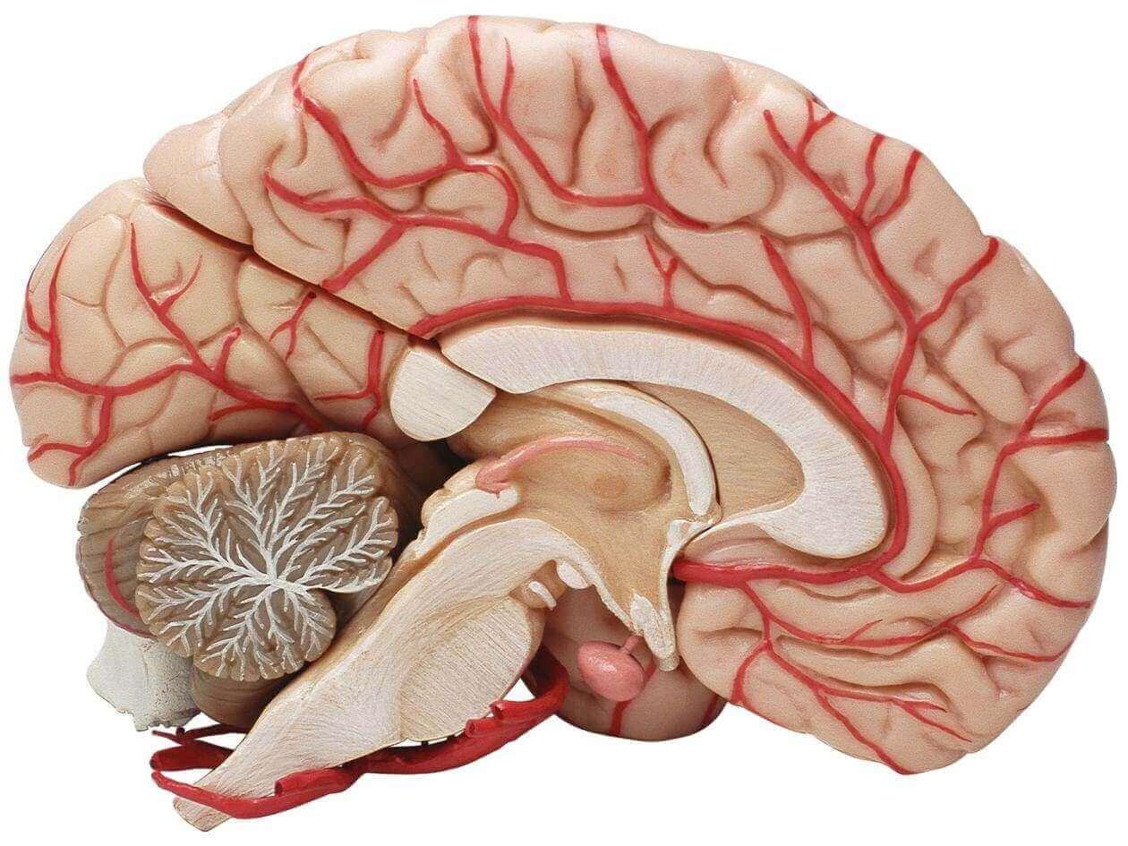 aivot puoliksi