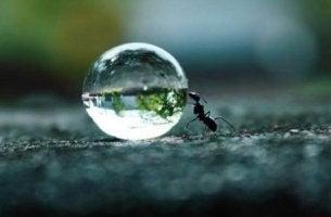 sinnikkyys auttaa muurahaista