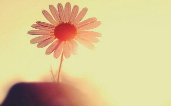 yksi kukka auringossa
