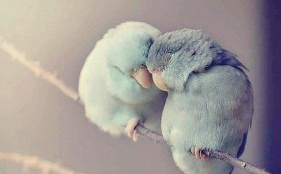 kaksi lintua kuhertelemassa