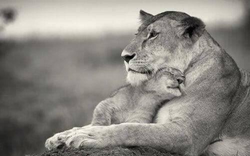 leijonaäiti ja -vauva