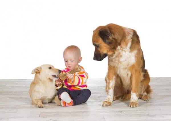 mustasukkainen koira, toinen koira ja vauva