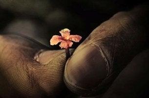 musta käsi ja pieni kukka