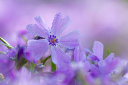 rakkaus saapuu varoittamatta: kauniit kukat