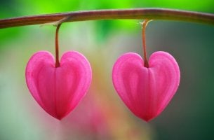 sydämenmuotoiset kukat