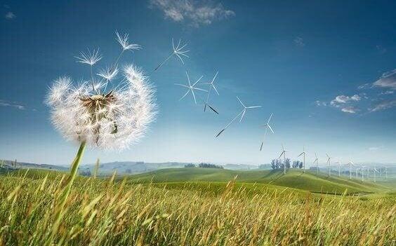 voikukasta muodostuu tuulivoimaloita