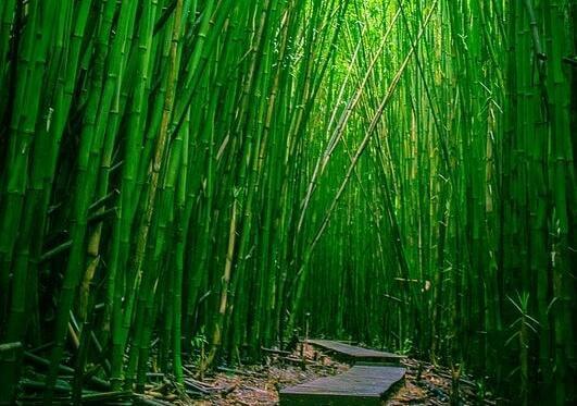 hankalat ihmiset: ole kuin bambu heidän edessään