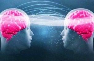 tryptofaani ja serotoniini ja kahdet aivot