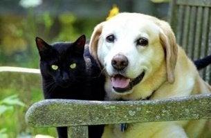 koira ja kissa yhdessä
