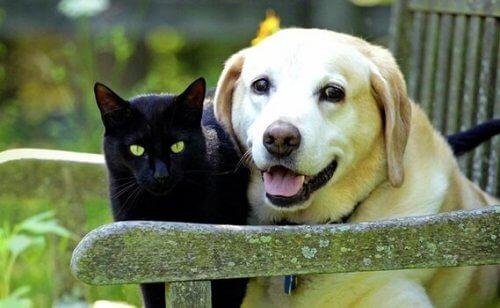 Lemmikin sureminen: rakkaan eläinystävän menetys
