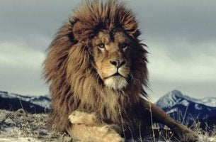 komea leijona