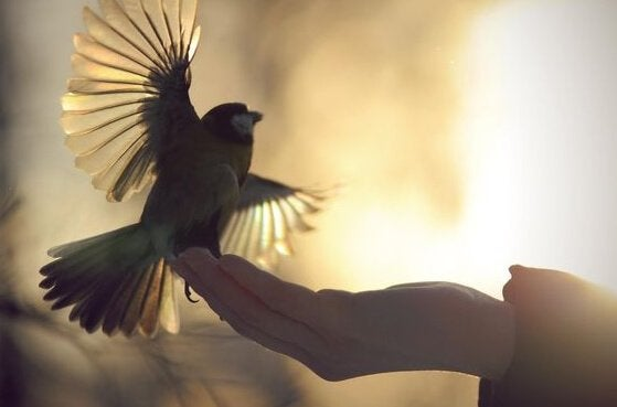 lintu räpistelee ihmisen kädellä