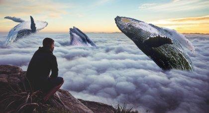 tee jotain pelottavaa kuten katsele valaiden hyppelyä taivaalla
