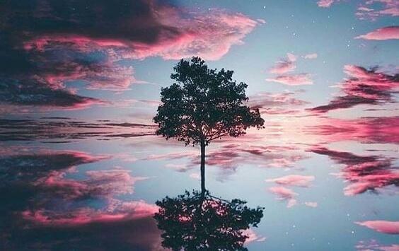 puutesti: puu ja taivas heijastuvat